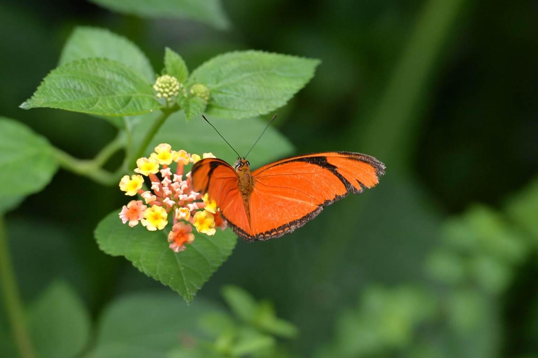 jardin-aux-papillons-morbihan-bretagne-sud-14 © Michel RENAC