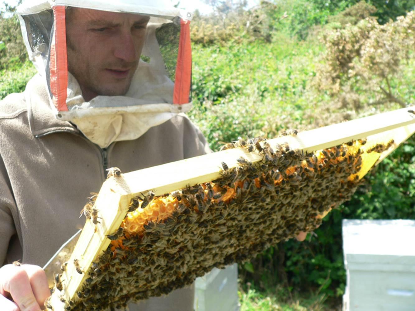 Le rucher de l'abeille noire ©