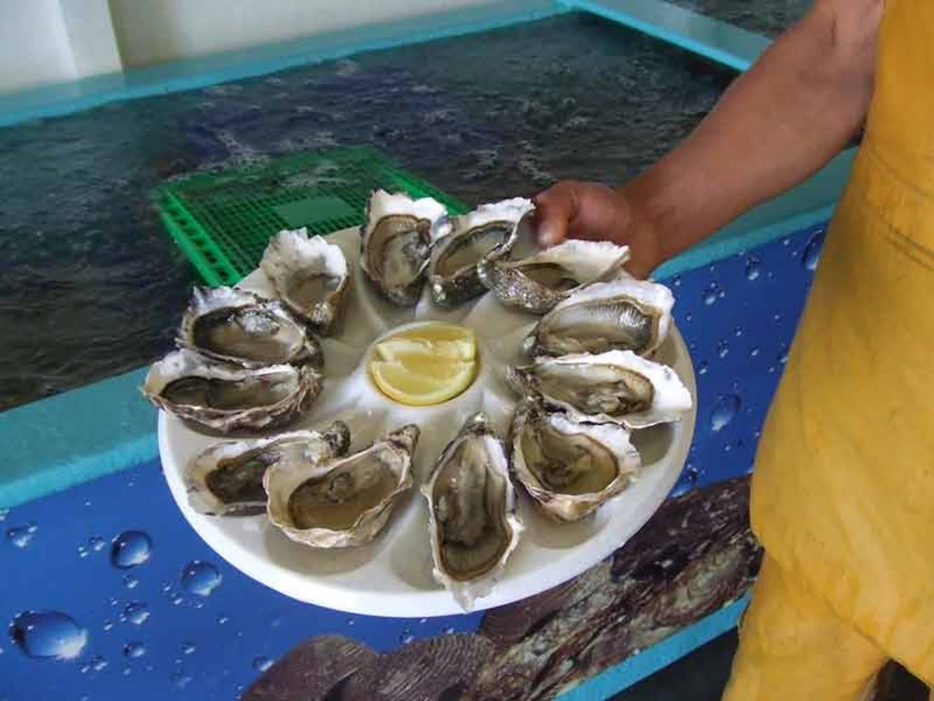 Ostréiculture Martin-Ile aux Moines-Golfe-du-Morbihan-Bretagne sud © Ostréiculture Martin