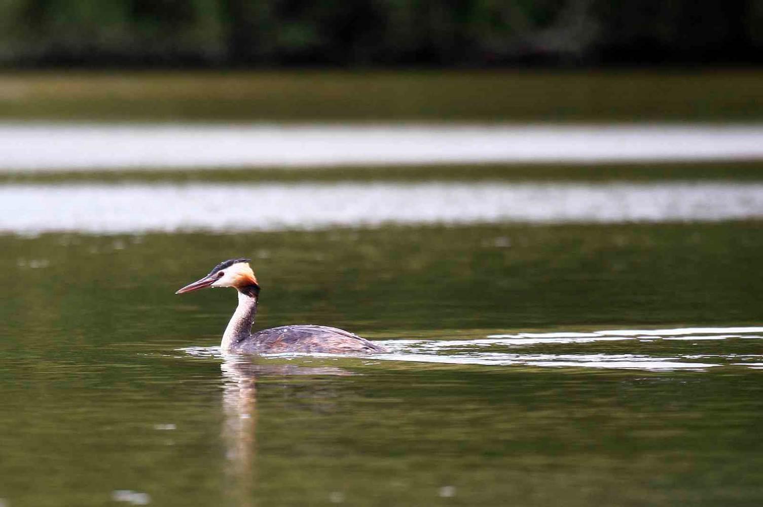 FAUNE-OISEAUX © CDT56-MS-faune-oiseaux (4)