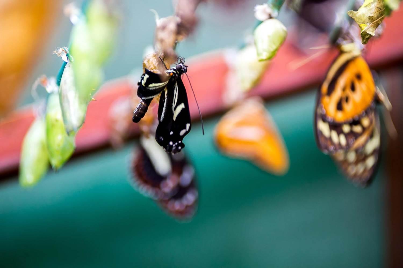 jardin-aux-papillons-morbihan-bretagne-sud-34 © Meero
