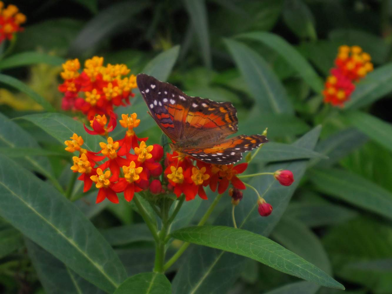 jardin-aux-papillons-morbihan-bretagne-sud ©