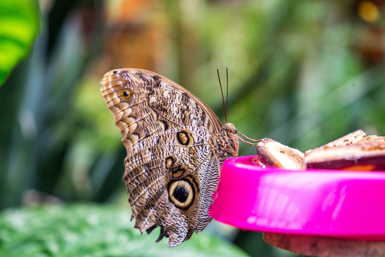 jardin-aux-papillons-morbihan-bretagne-sud-25 © © Magalie BARRE