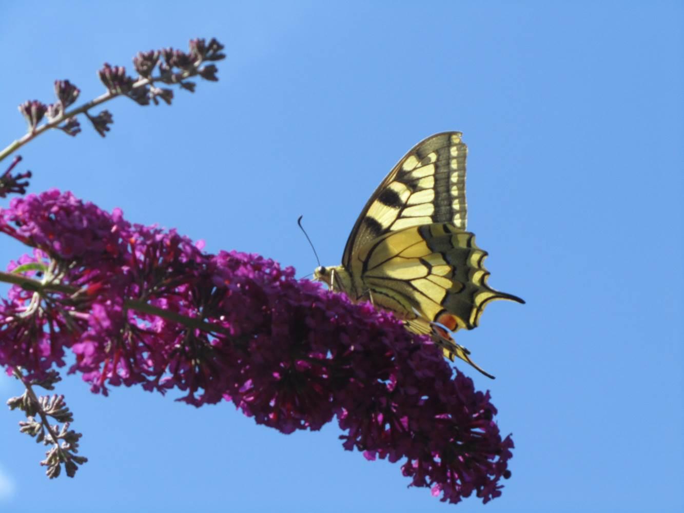 La magie de notre arbre aux papillons ©