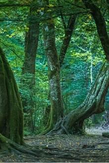 Festival International des Forêts Légendaires