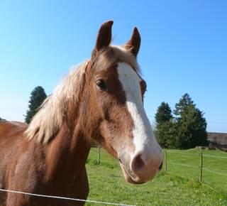 Centre Equestre Carentoir