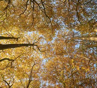 Balade en forêt de Brocéliande