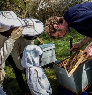 Le rucher de l'abeille noire