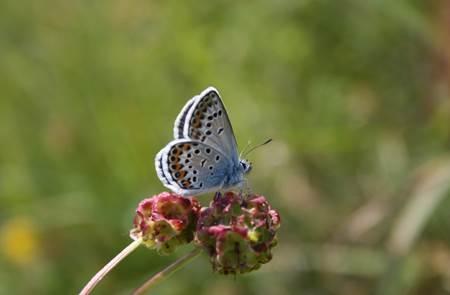 Les Papillons du Grand Site