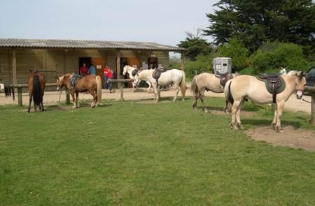 Centre de Tourisme Equestre Les Highlands