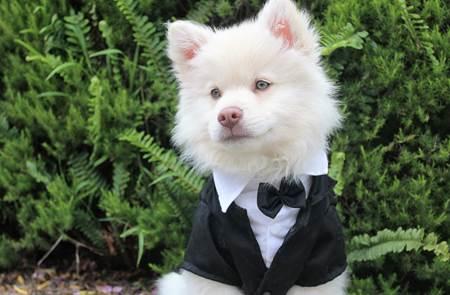 Défilé canin déguisé